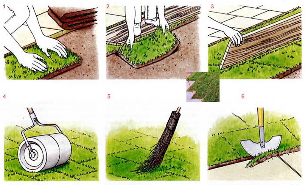 Как посадить рулонный газон на даче